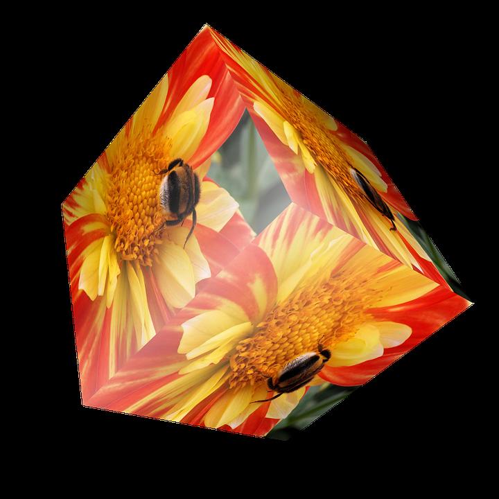 Cube, Flower, Dahlia, Yellow, Insect, Bee, 3dwürfel