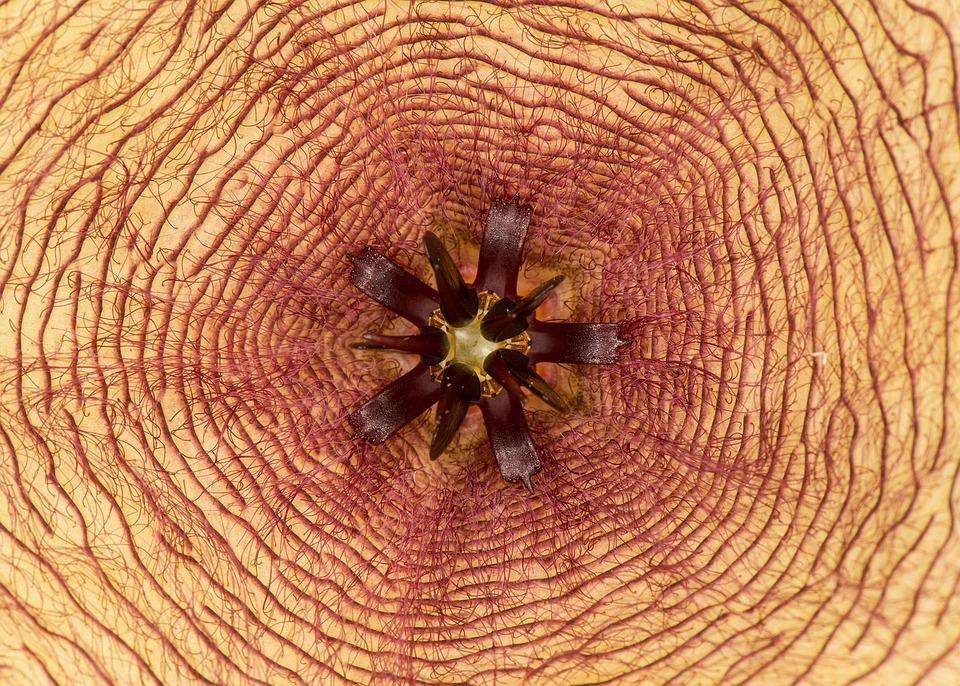 Flower, Symmetry, Center, Geometry, Macro, Abstract