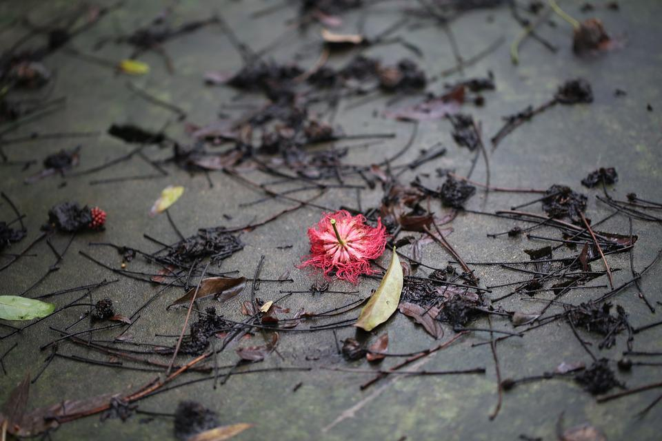 Flower, Red, After Raining, Spring, Flag, Plant, Nature