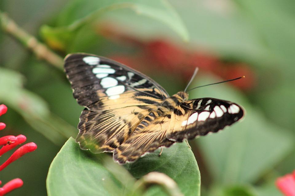 Butterfly, Flower, Animal, Papiliorama Kerzers