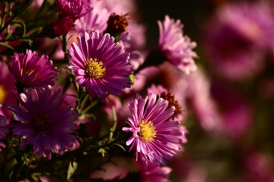 Flower, Rose Hill Cemetery, Autumn, Joy, Pink