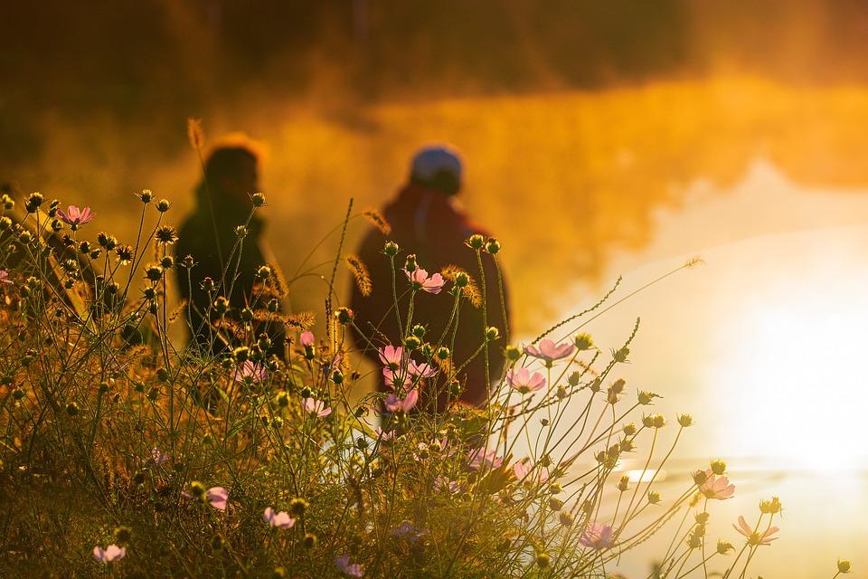 Flower, Petal, Nature, Autumn, Mood, Friendship