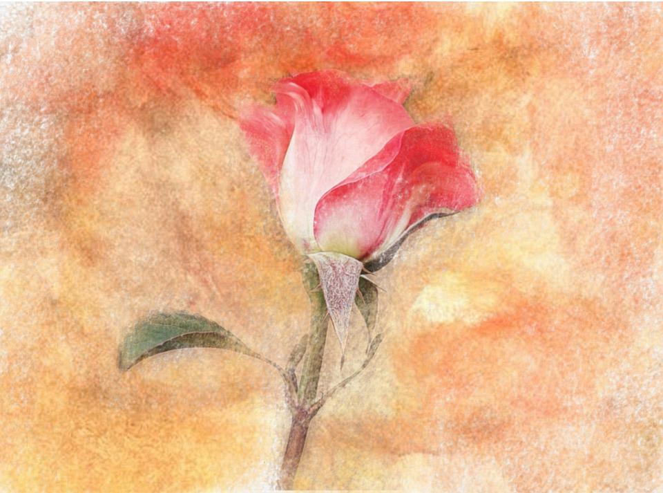 Flower, Art, Painting, Background