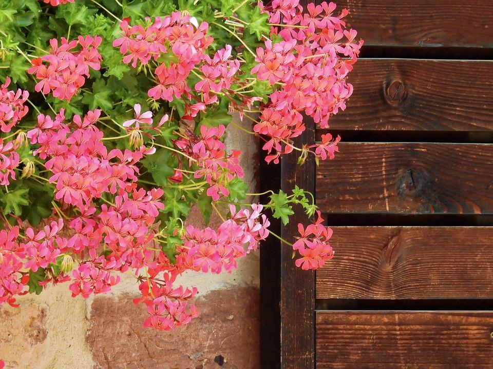 Flower, Blossom, Bloom, Nature, Plant, Pink, Background