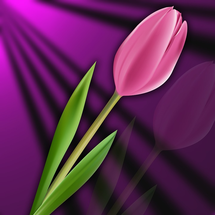 Nature, Tulip, Flower, Plant, Tulipan Pink, Background