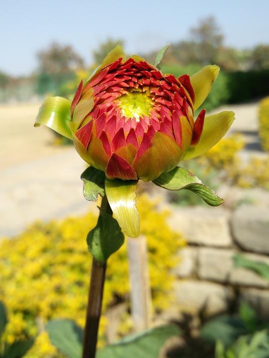 Flower, Nature, Flora, Leaf, Beautiful, Sunflower