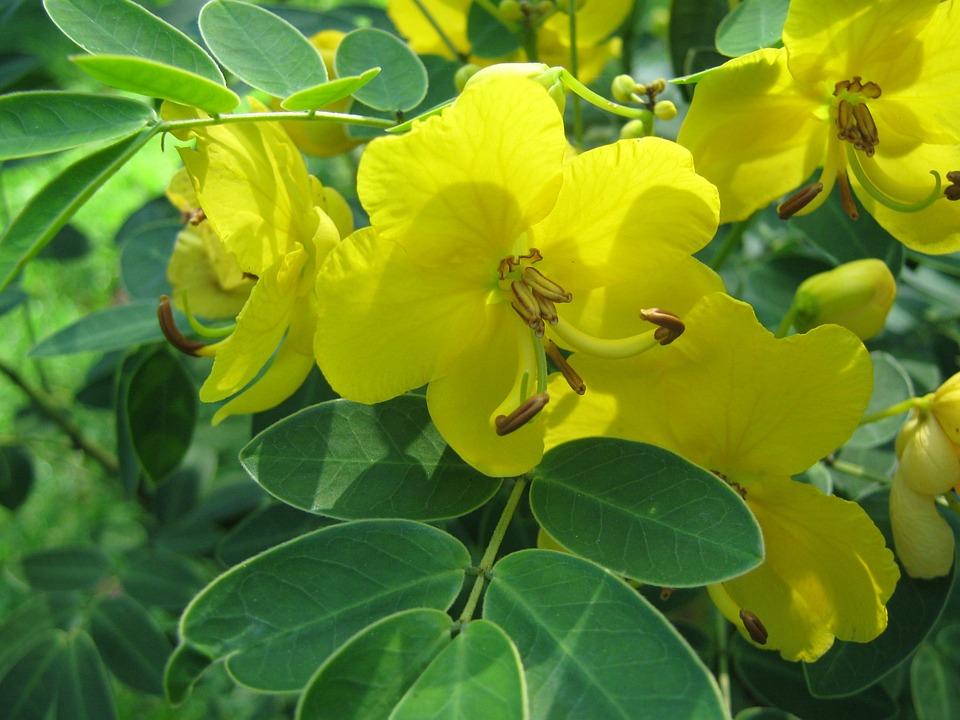 Lemon Yellow, Blooming, Yellow, Flower, Beauty, Flora