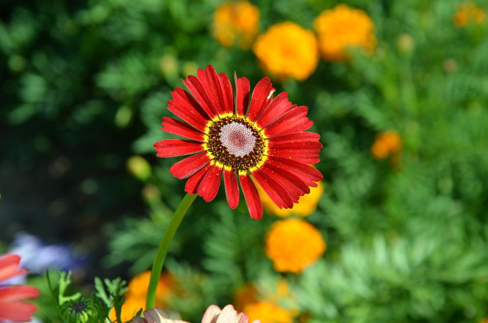 Flower, Flowers, Nature, Flora, Background, Beauty