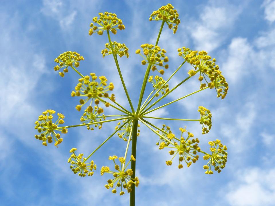 Flower, Geometry, Beauty, Sky, Natural Geometry