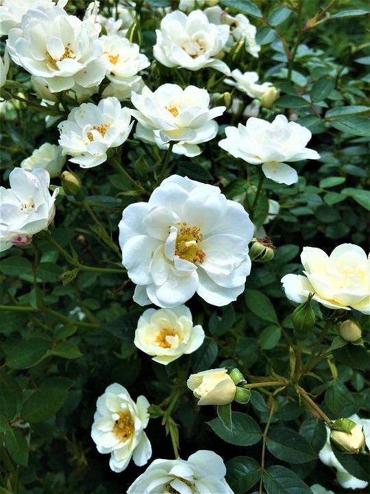 Flower Bed, Flower, Plant, Garden