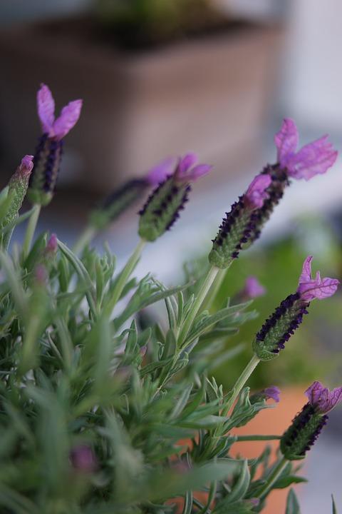 Flowers, Garden, Flower Bed, Balcony, Summer, Spring