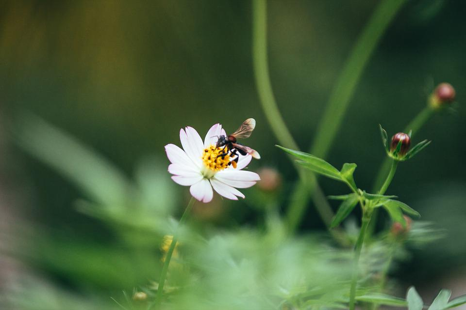 Feed, Flower, Bee