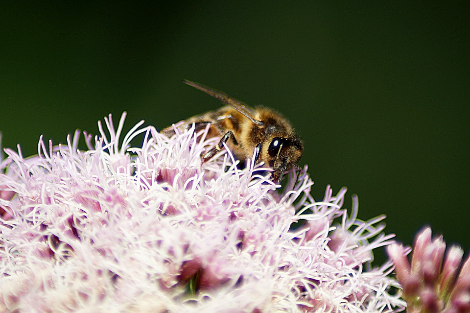 Bee, Flower, Nature