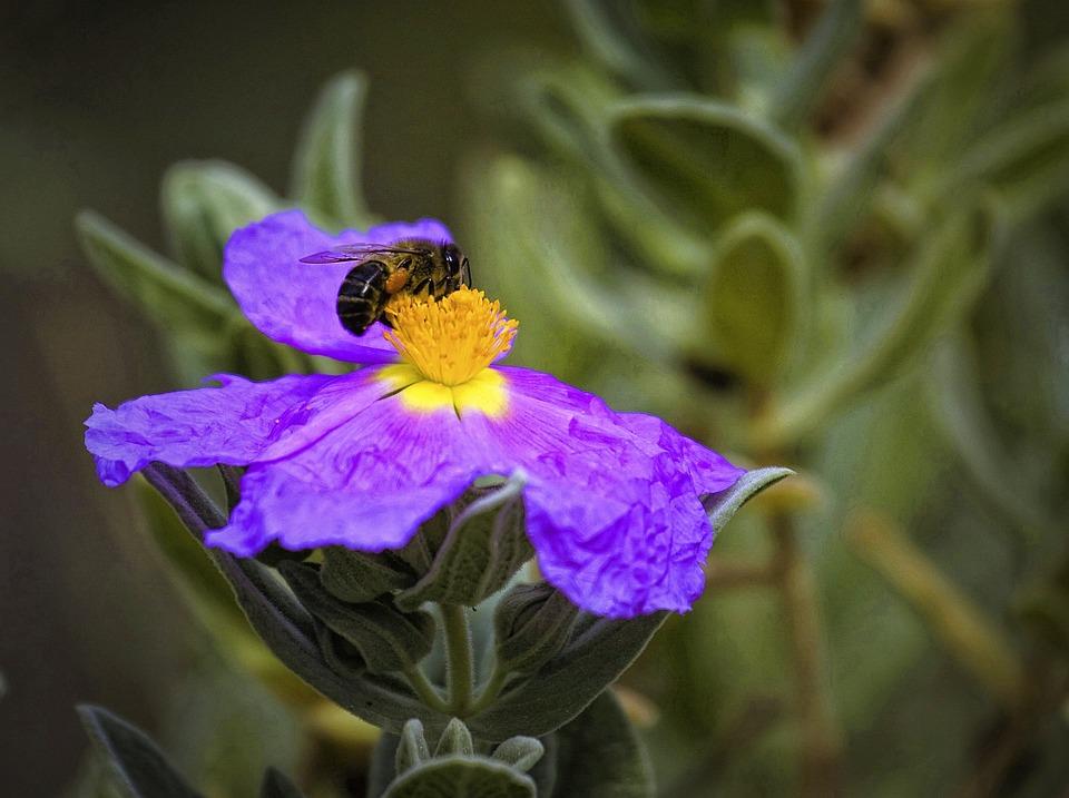 Nature, Flower, Bee, Plant, Spring, Flora, Color