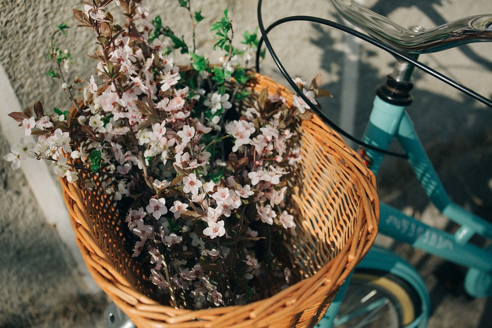 Basket, Bike, Bicycle, Flower, Bunch, Plant