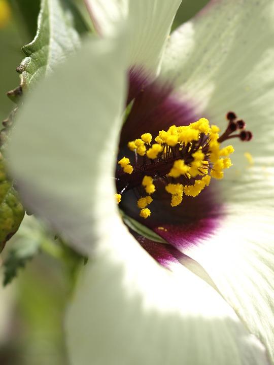 Close Up, Blossom, Bloom, Flower