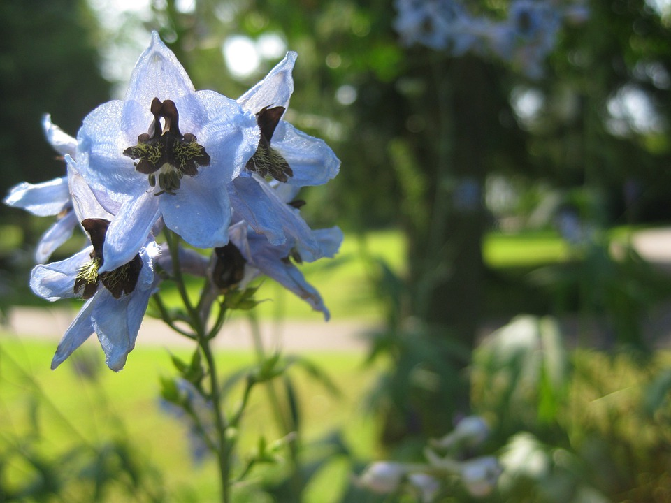 Flower, Blossom, Bloom, Spring, Nature, Plant, Helllila