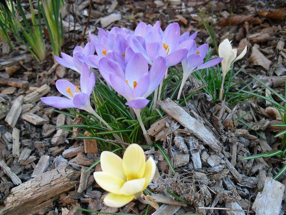Flower, Blossom, Bloom, Plant, Flora, Petals, Garden