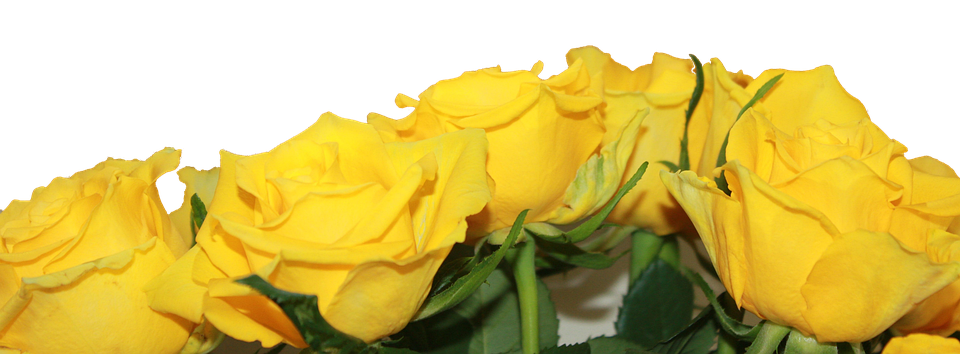 Roses, Yellow, Flower, Bunch, Bloom, Blossom, Nature