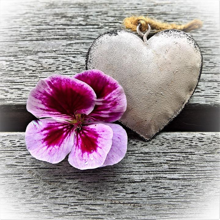 Geranium, Blossom, Bloom, Heart, Flower, Pink Purple