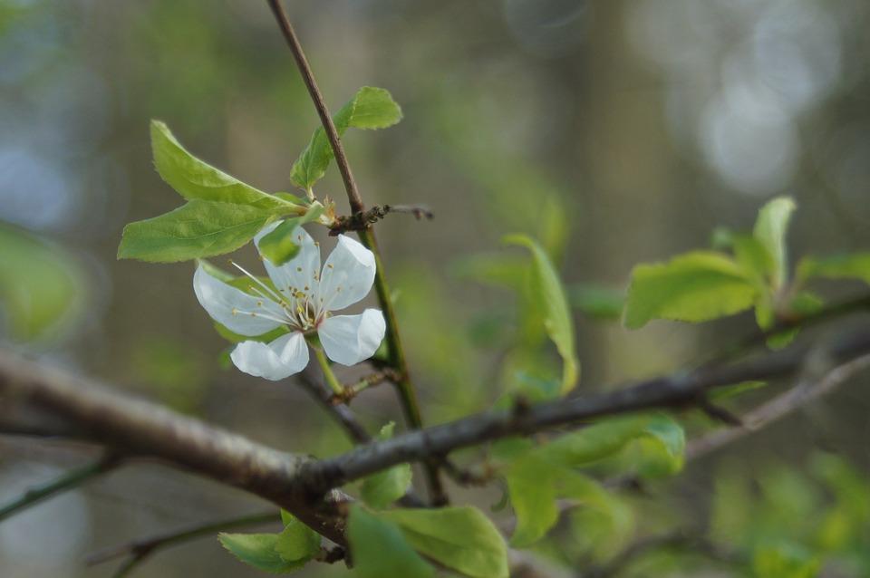 Flower, White, Spring, Plant, Bloom, Natural, Macro
