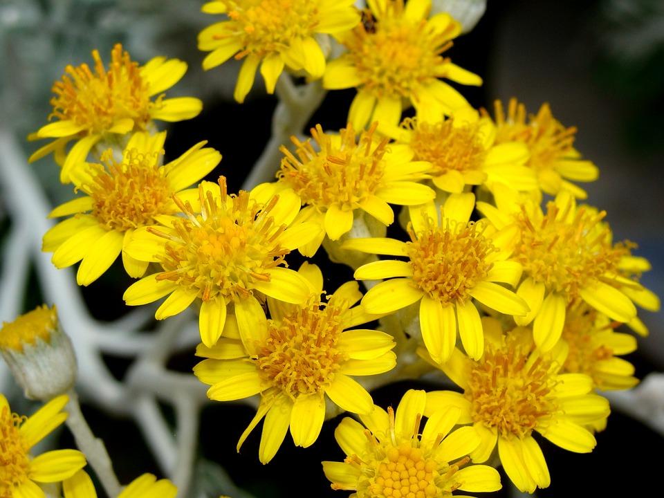 Yellow, Flower, Petals, Nature, Bloom, Garden, Spring