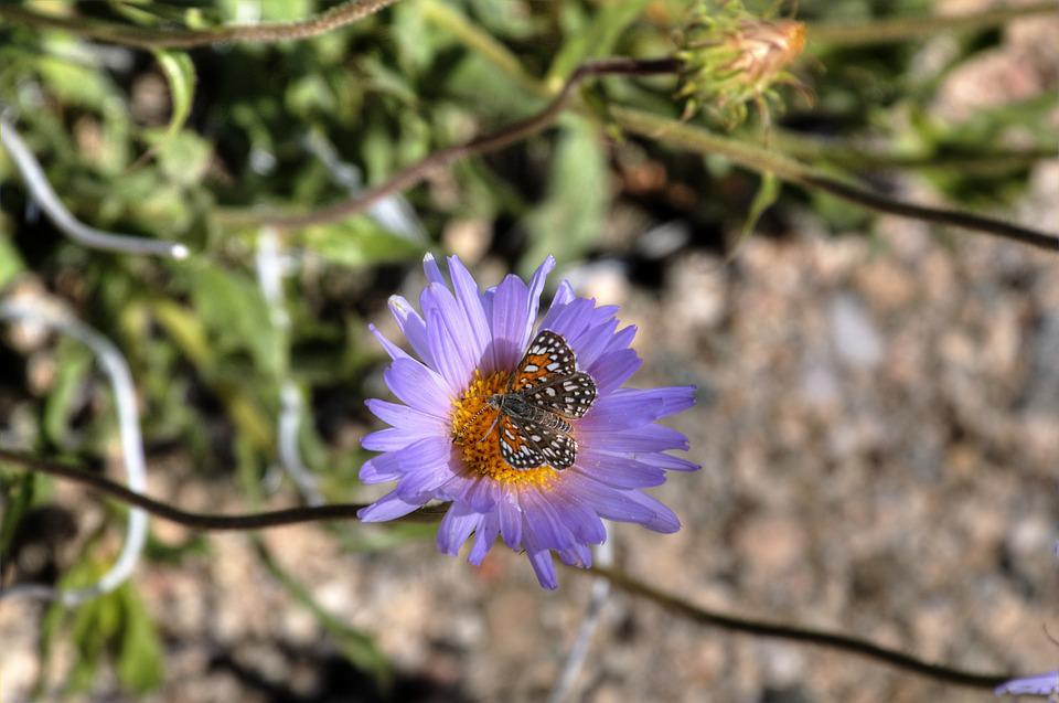 Purple, Flower, Butterfly, Purple Flower, Bloom, Spring