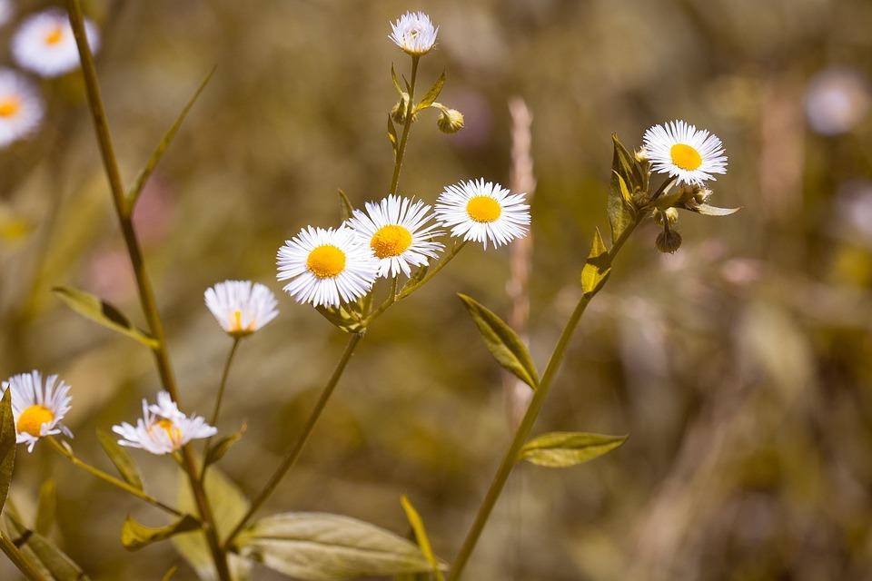 Flower, Pointed Flower, Wild Flower, Blossom, Bloom