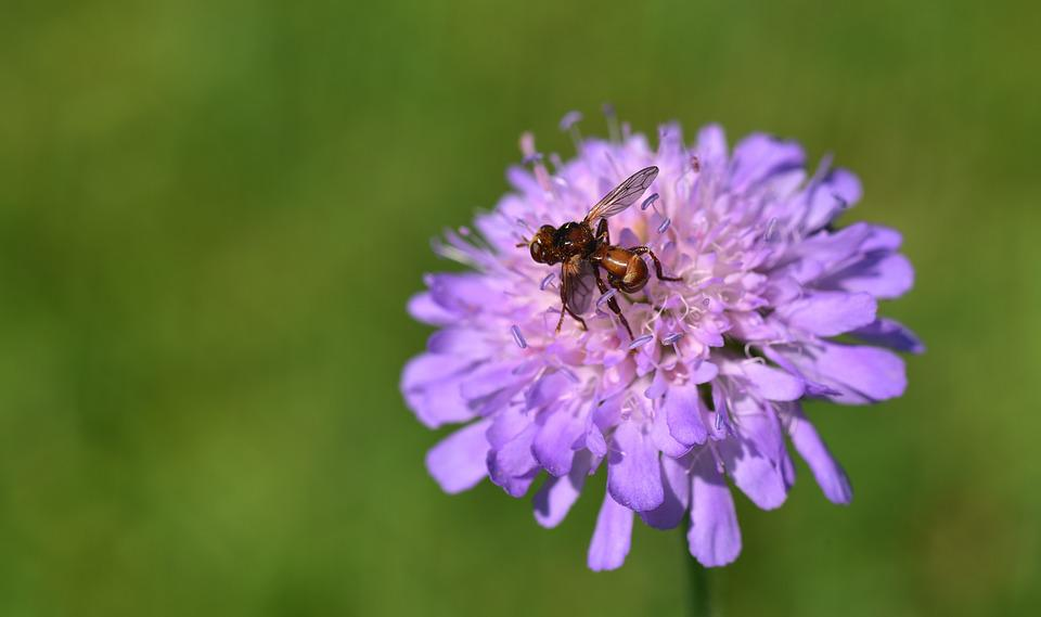 Flower, Blossom, Bloom, Purple, Pointed Flower, Insect