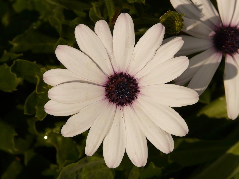 Flower, Nature, Plant, Blossom, Bloom, White