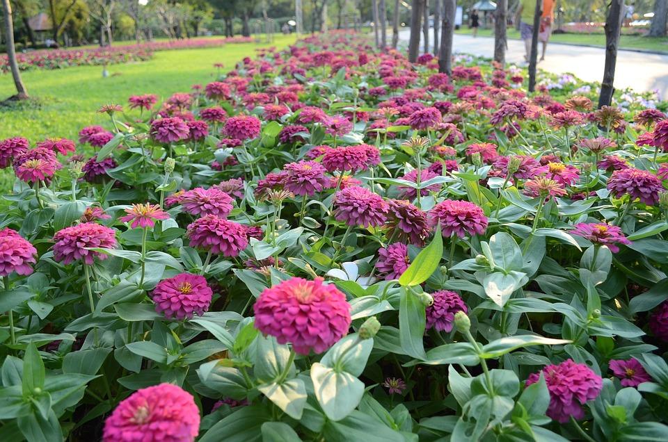 Garden, Flower, Flowers, Plant, Flora, Blossom