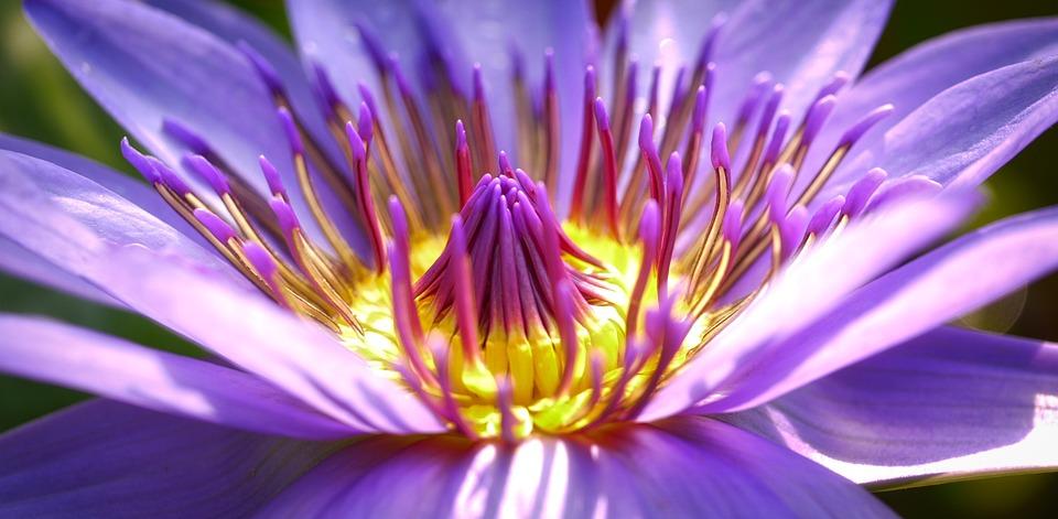 Flower, Blossom, Bloom, Nature, Purple Flower, Close Up