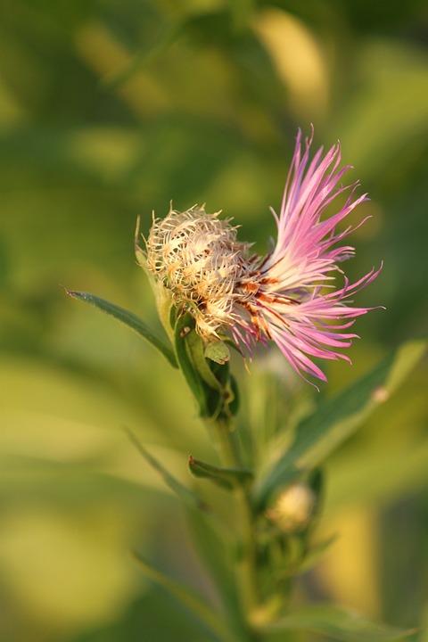 Flower, Bloom, Blossom, Spring, Nature, Summer, Pink