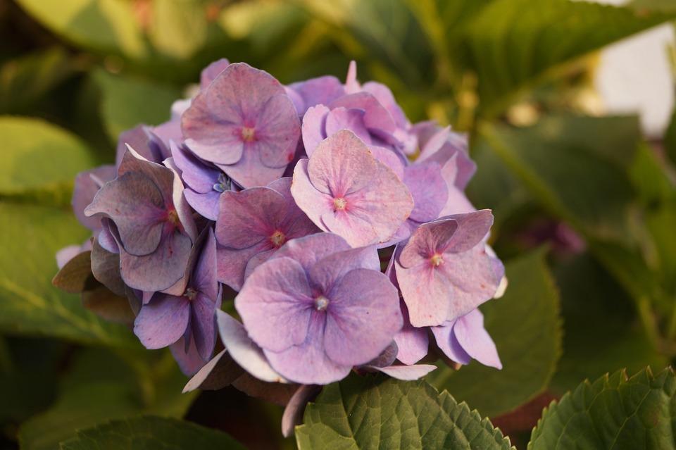 Flower, Blossom, Bloom, Summer, Purple, Violet, Plant