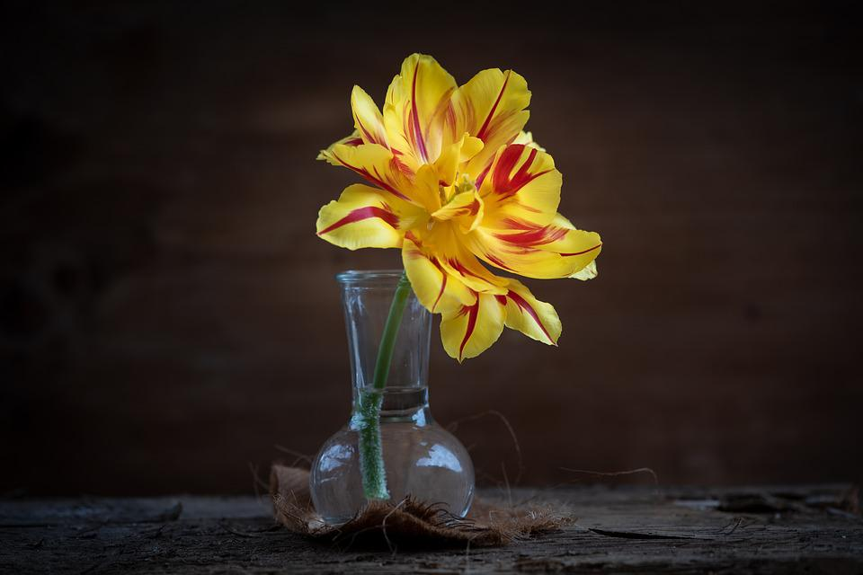 Tulip, Yellow, Flower, Yellow Flower, Blossom, Bloom