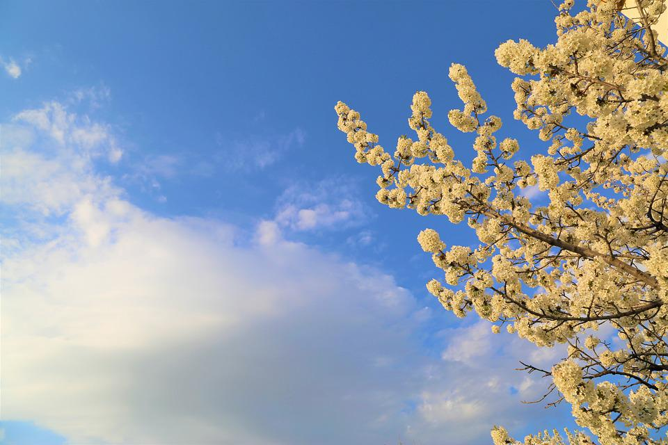 Nature, Sky, Blue Sky, Spring, Flower, Plant, Blooming