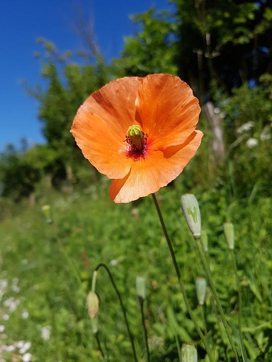 Flower, Blue, Sky, Summer, Natural, Orange, Red