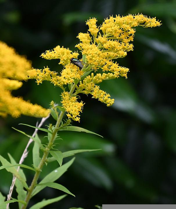 Flower, Garden, Bloom, Blossom, Flora, Botany, Nature