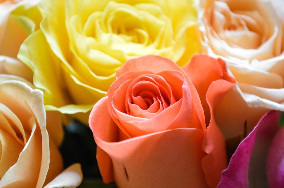 Roses, Bouquet, Flowers, Love, Flower, Flora, Petals