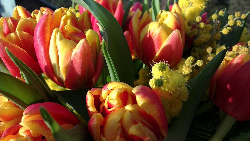Tulip, Mimosa, Flower Bouquet