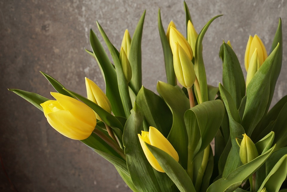 Tulip, Spring, Bouquet, Flower, Plant, Nature, Leaf