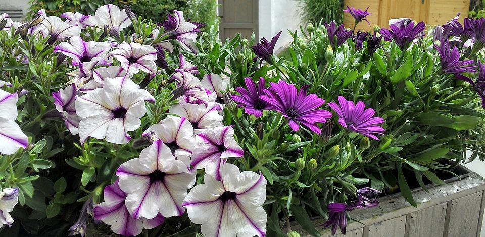 Flower Box, Flowers, Purple, Violet, Plant, Blossomed