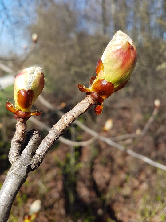 Nature, Wood, Plant, Outdoors, Branch, Flower, Bud