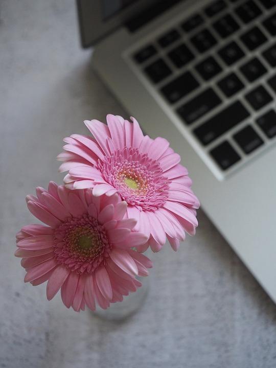 Flower, Flora, Nature, Petal, Bright, Gray Nature