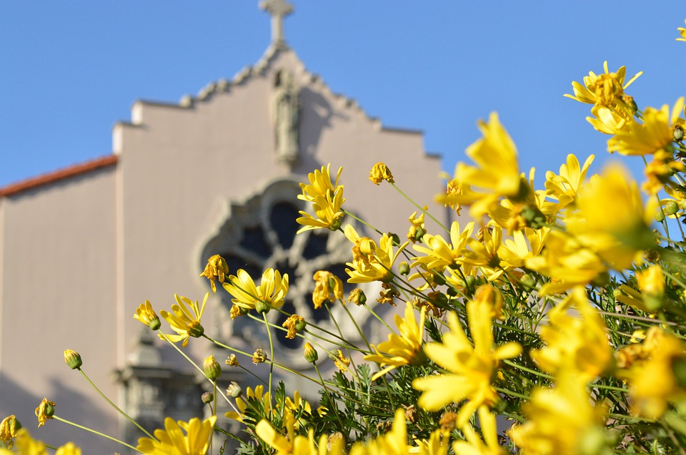 Church, Flower, Nature, Religion, Building