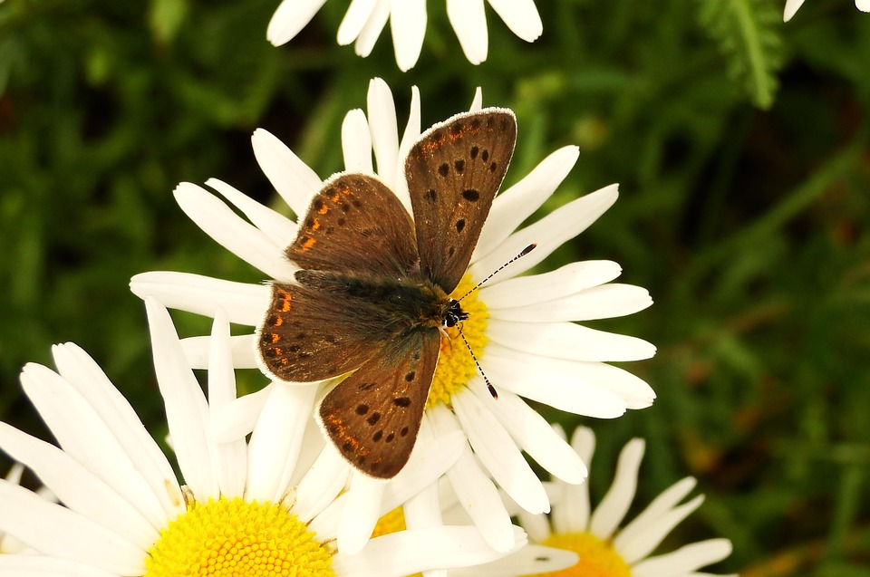 Nature, Insect, Flower, Butterfly Day, Summer, Animals