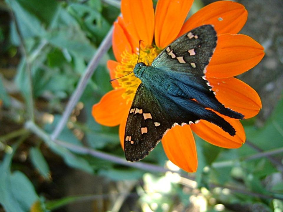 Butterfly, Blue, Insect, Flower, Red