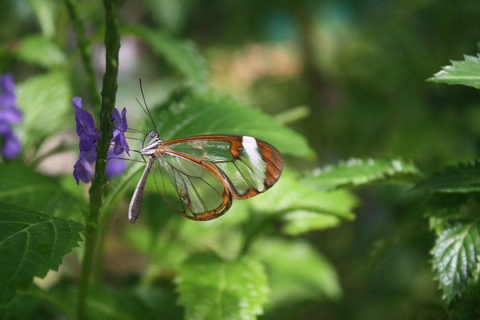 Butterfly, Insect, Flower, Leaf, Leaves, Nature