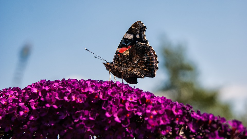 Butterfly, Flower, Outdoor, Garden, Nature, Bug