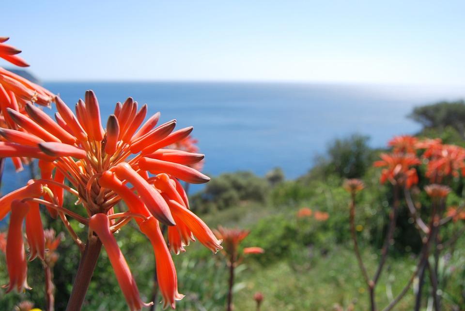 Flowers, Sea, Flower, Arid Landscape, Cactus